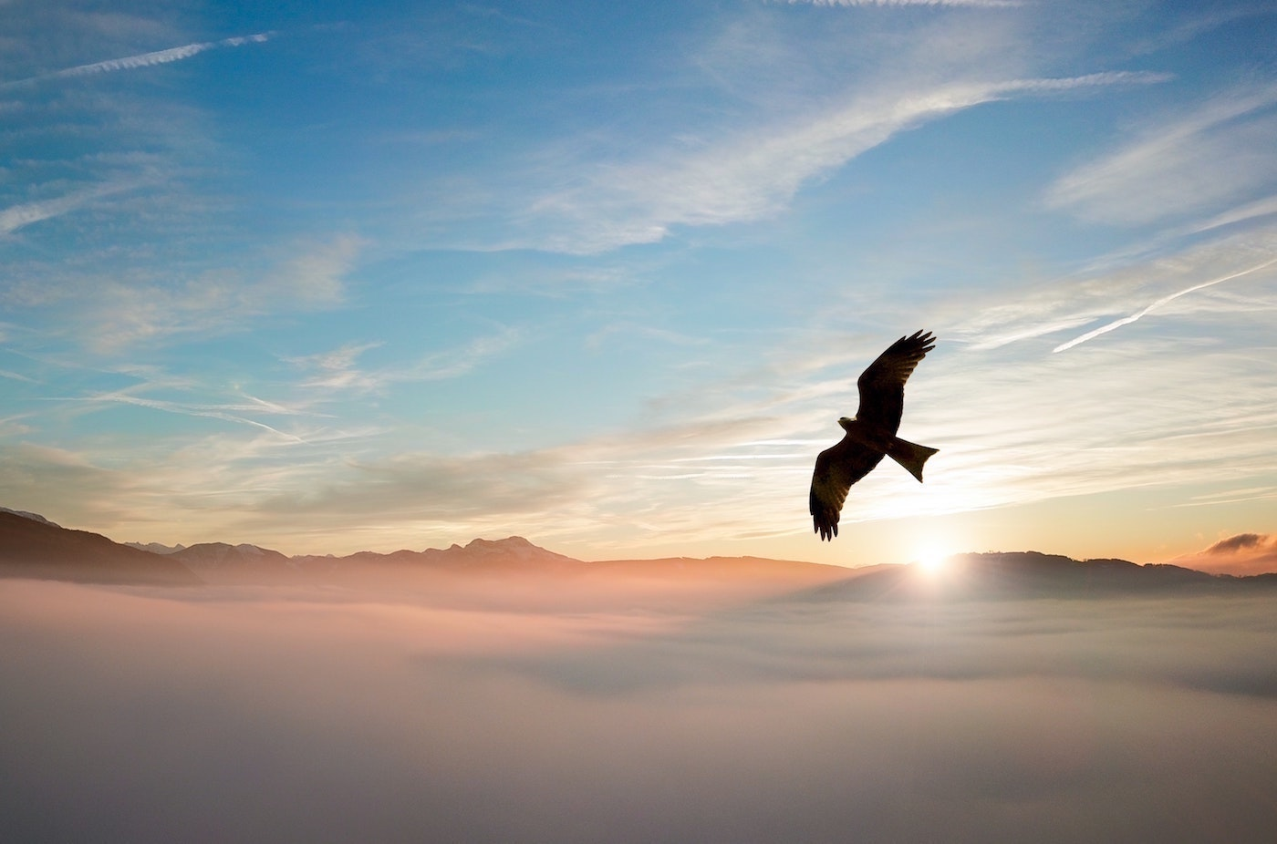 Goal Setting Part 2: How The Image Of An Eagle Helps Me Being Better Organized
